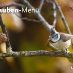 Neu: Vespertouren im Naturpark