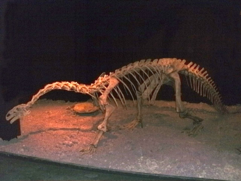skelett-museum-auberlehaus-trossingen